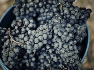 Texas Hill Country Malbec from the Hye Estate Vineyard at William Chris