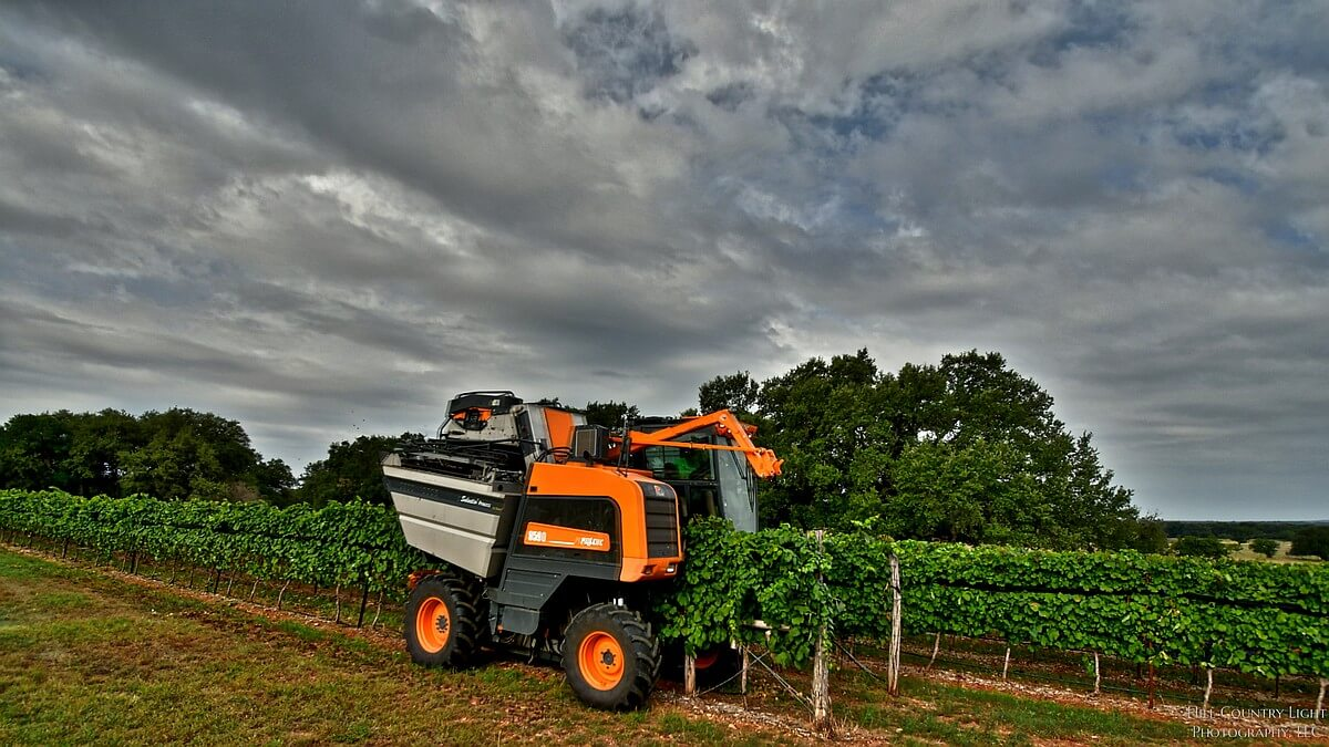 Pellenc Harvester on the job at William Chris Vineyards