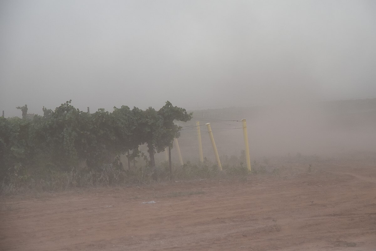Windstorm at Bingham Famiily Vineyards