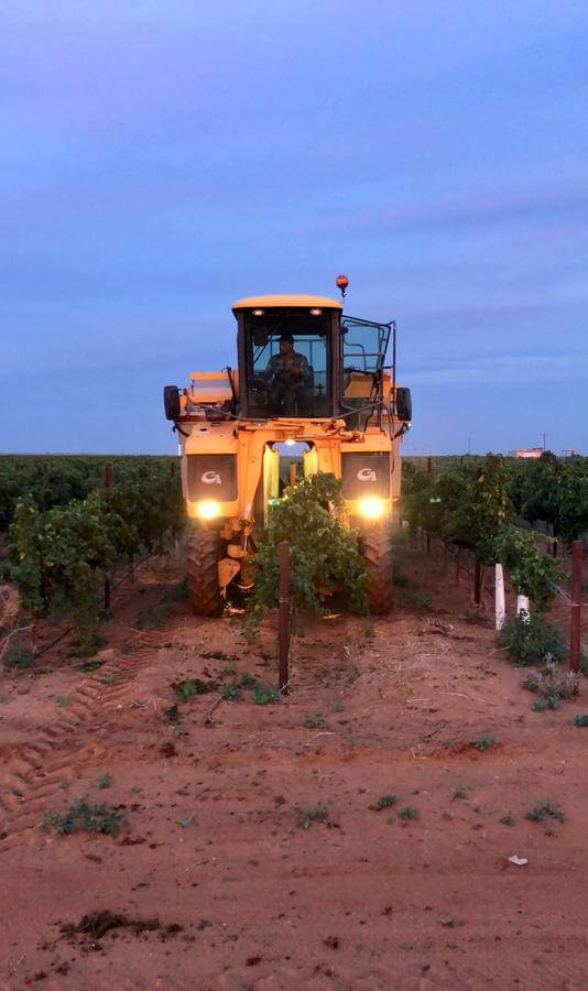 Large mechanical harvesters are used to pick most Texas High Plains grapes