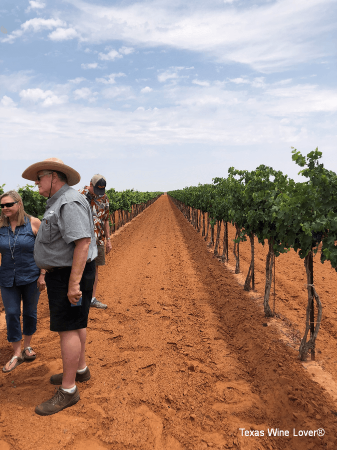 Classic iron-rich loamy sand soil in Newsom Vineyards in Yoakum County