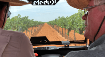 Texas High Plains Vineyards, Part Two, August 2018