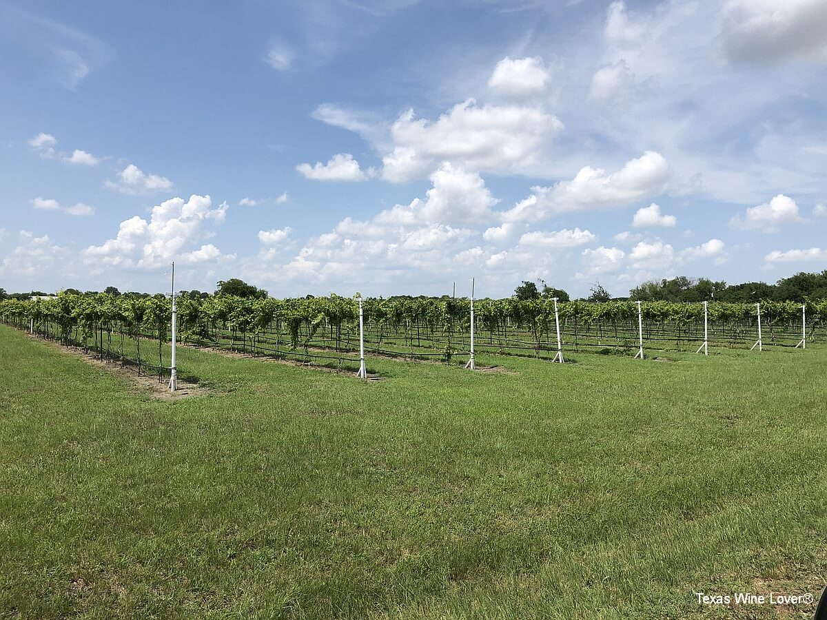 Country Spring Vineyard