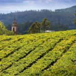 The Wines of Rias Baixas