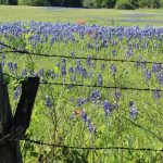 Some Texas Wineries Inch Toward Reopening, Effective Friday