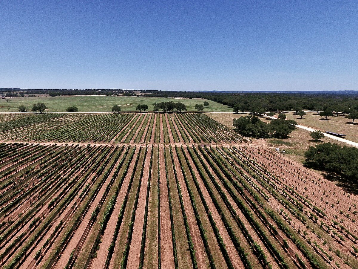 A drone photo of Sandy Road Vineyard showing plantings of Prieto Picudo and Mencia (background, center and right) and Tempranillo (foreground, center)
