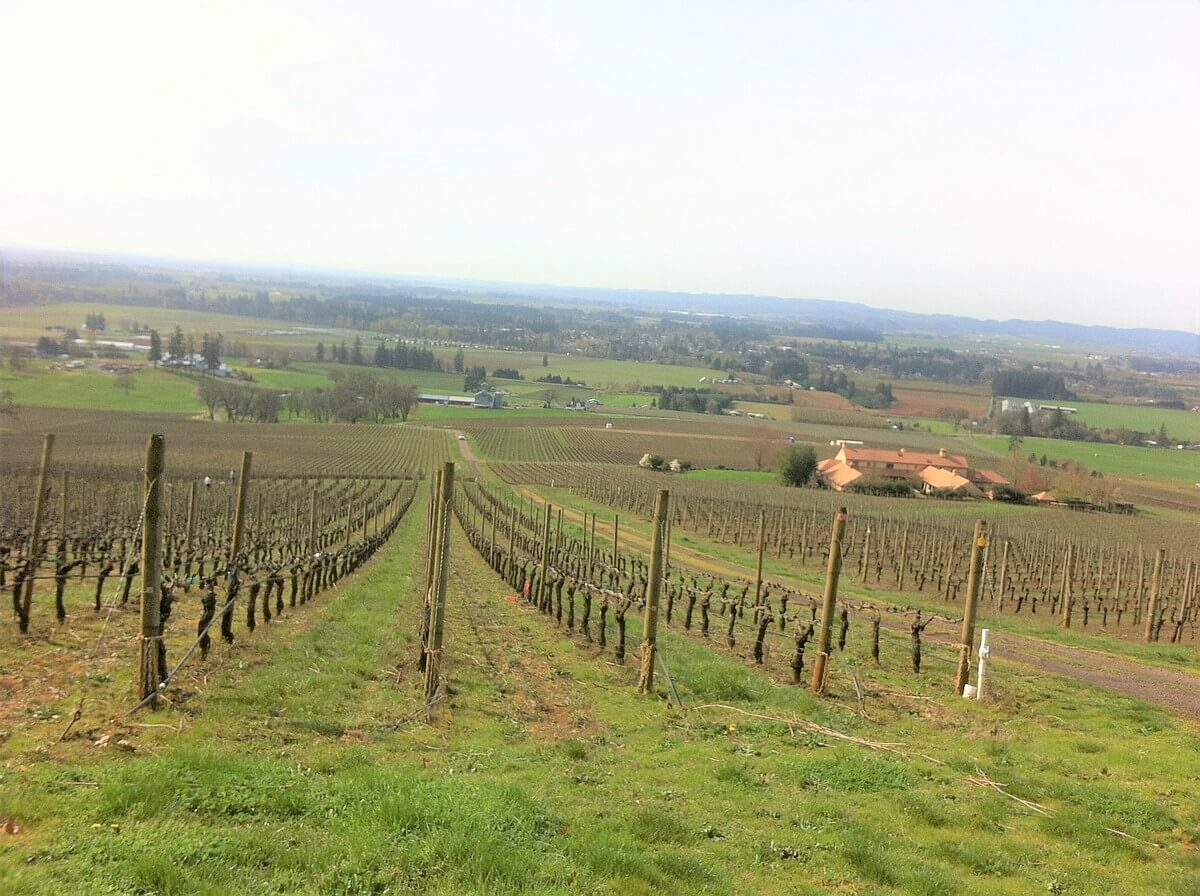 Vineyard on a Slope in Oregon
