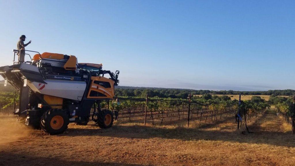 Pedernales Harvest 2020
