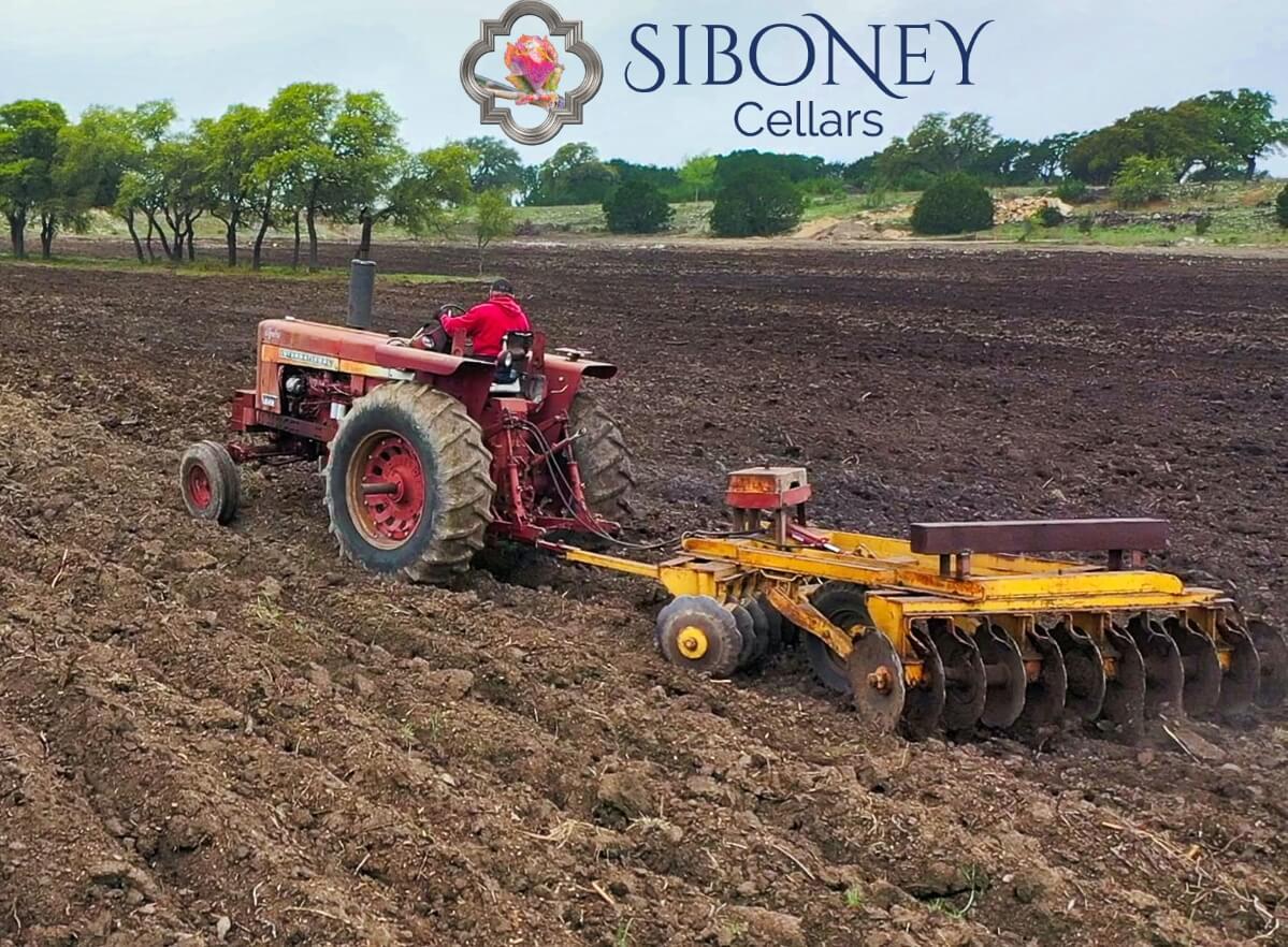 Siboney Cellars Planting Event
